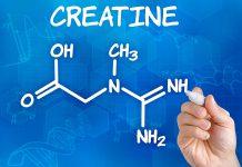 Kreatin verhindert Muskelabbau bei Ruhigstellung des Armes