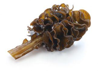 Fucoxanthin reduziert die Fettabsorption im Verdauungstrakt