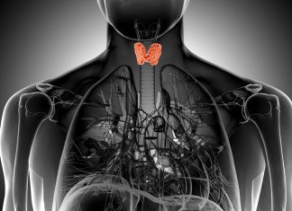 Die Auswirkungen von Sojaprotein auf die Schilddrüsenfunktion
